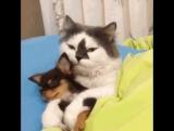 спим кот и собачка
