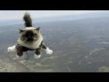 #31 Гифки со звуком  Прикольные видео подборки