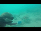 After spending 3 hours with the sea turtle, the diver gained her trust and this was the awesome outcome