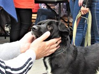 Пес и кот в тобольске в контакте