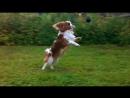 Ларсик учится ловить лапами мячик