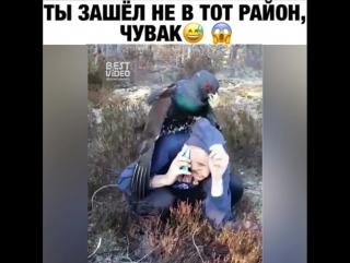 Бесстрашная птица