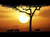 Африка - Чудо Нашей Планеты.Дикая природа Африки!Док сериал