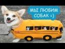 Собаки коты и кошки | приколы 2017 про животных | домашние животные|С ПИТОМЦАМИ|Funny C