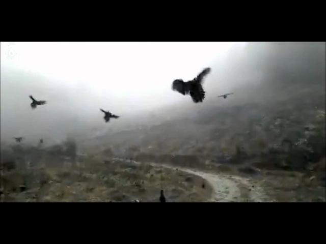 Какой-то курино-гусиный апоккалипсис