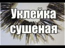 Уклейка сушеная   Как сушить рыбу   Вяленая рыба / Dried fish   Видео Рецепт