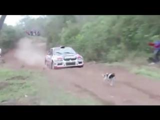 Чудесное спасение собаки на автогонке в Боливии