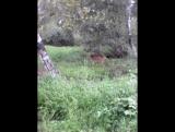 моя встречя с олененком)