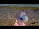 Шпильки с порхающими бабочками