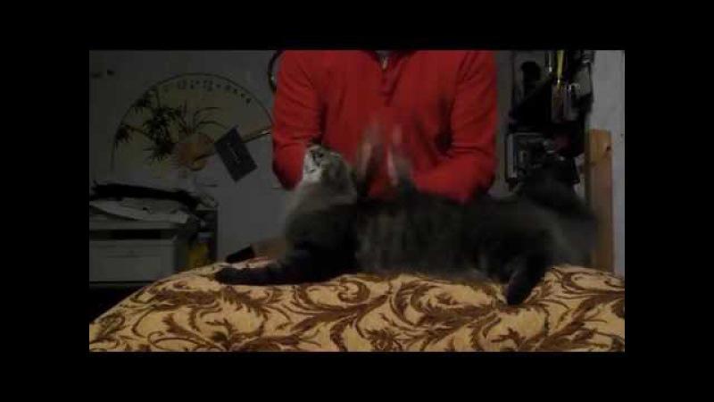 Кот Космос любит массаж ....