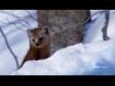 The Hunt - PINE MARTENS HUNT IN SNOW TUNNELS (EP 3) - Sundays at 9|8c on BBC AMERICA