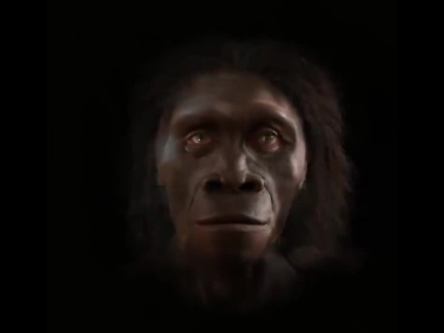 The evolution of human faces in the last 6 million years