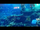 Dubai Mall , aquarium,OAE....💎💎🐟🦈🐠🐋