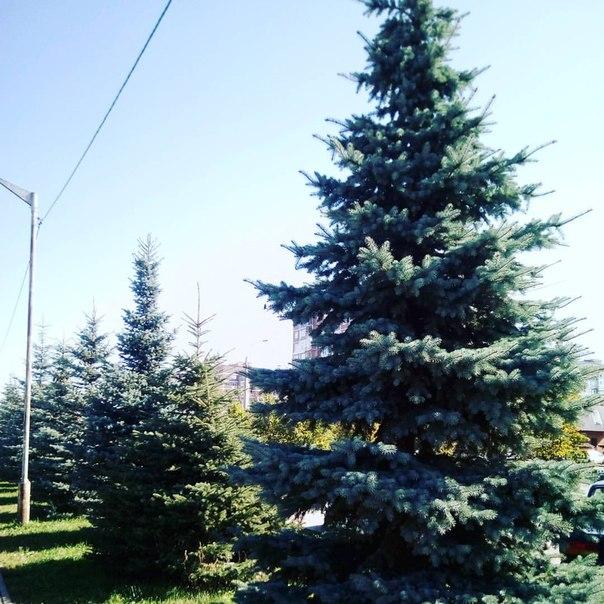 Там на елках скачать бесплатно mp3