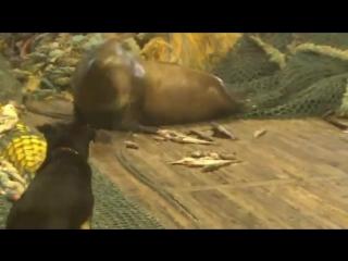 рыбаки поймали тюленя