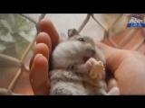 Лучшие Приколы 2017 - Самые Смешные Видео - Угарный тест на психику - YouTube