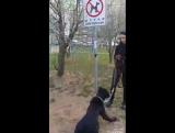 Собака съела товар