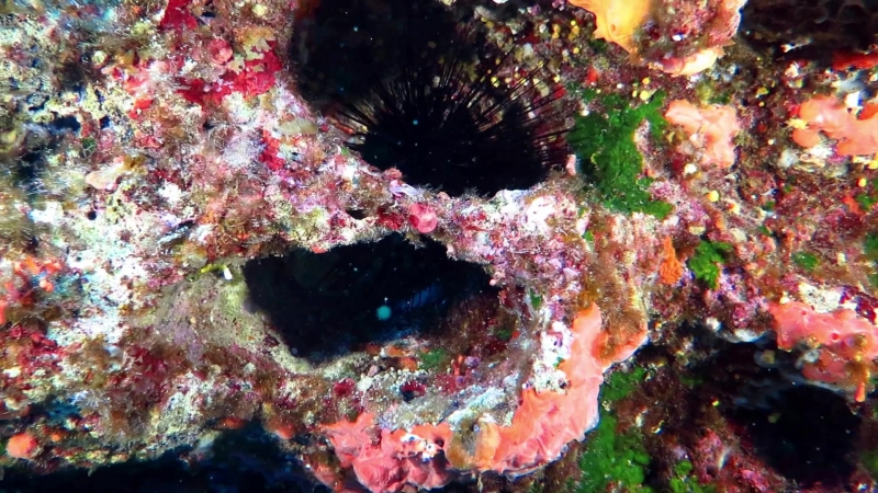 2017-05 GOZO Relitti Grotte VIDEO H.264 YOUTUBE