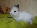 Кролик Тини бегает по кровати