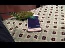 Talking bird activates Siri on the iPhone by saying Hey Siri
