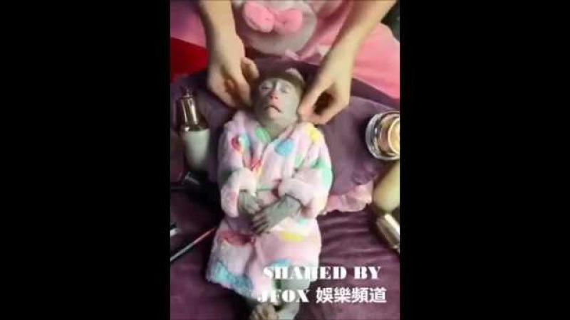 Массаж для обезьянки