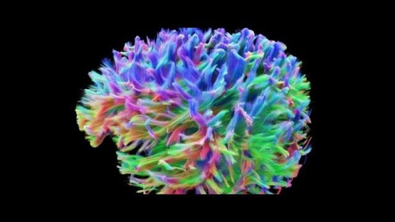Cамая детальная 3D модель мозга человека - The most detailed 3D model of the human brain