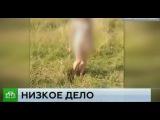 СК установил личности юных истязателей школьницы из Ярославля