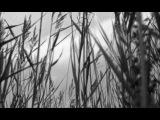 Noize MC  Выдыхай (Official Music Video)