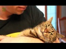 Cat against the coubs with cats Cat against the muzhchin · coub коуб