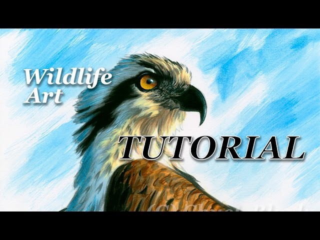 How to Paint a Realistic Bird of Prey