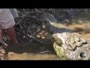 Мир Приключений - Опасные встречи. Человек и дикие крокодилы. Экстрим. Extreme with wild crocodiles