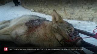 Чтобы выкупить животное у охотников зоозащитникам нужно собрать 15 тысяч рублей