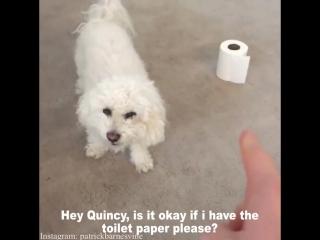 Собака ничего не отдавака (6 sec)