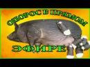 Вьетнамские вислобрюхие Опорос свиноматки Уникальное видео