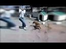 Un hombre se burla de un perro 'pitbull' amarrado sin medir las consecuencias ORIGINAL