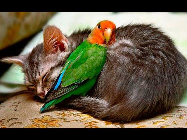 Приколы про котов 24 Смешные коты и попугаи
