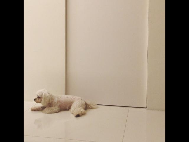 我洗澡的時候妳都沒這樣守門,哥哥洗澡妳就坐在門口守到睡著⋯這隻見