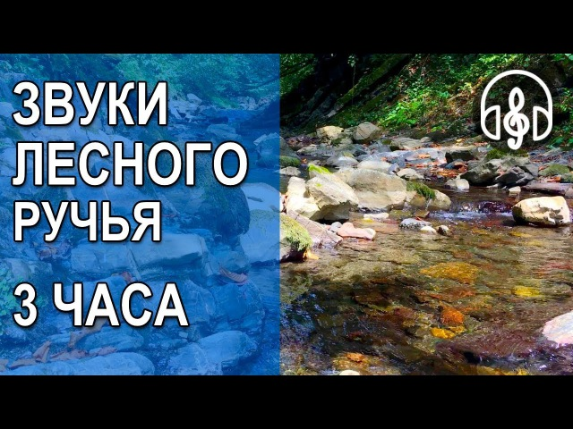 Лесной ручей, Звук ручья, Шум ручья, Звуки природы, Шум воды, Горный ручей