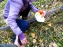 Идём с друзьями и гостями по гектару в лес искать грибы под драм да басс нейро...