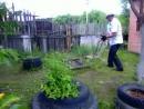 Во саду ли в огороде