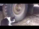 Игра в прядки (Том и Джери по русски))