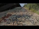 Как население Приамурья обрекают на голод или шли лихие эскадроны приамурских ...