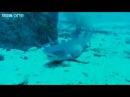 SINGING SHARKS!