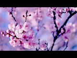Healing Chinese ZEN music of Anxiety & Stress | To pacify the body & Mind | Relax Music