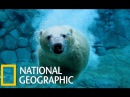Wild Russia Siberia National Geographic Animal Planet AP