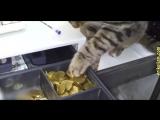 кошки прикол.mp4