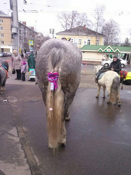 https://vk.com/horses_in_the_city?w=wall-12113906_345055