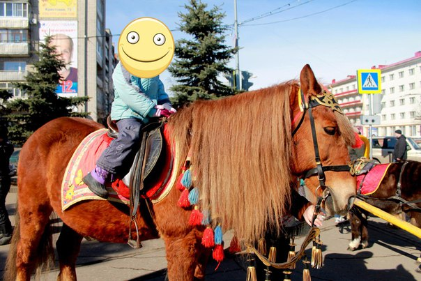 https://vk.com/horses_in_the_city?w=wall-12113906_344017