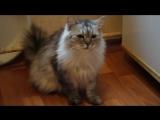 кошка Розочка из приюта бабы Майи