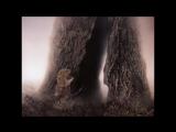 Ёжик в тумане или